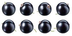 Black currant isolate. Currant black on white background. Currant with clipping path. Top view. Side view. Set with full depth of field.