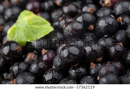 Black currant with drops of water and green leaf