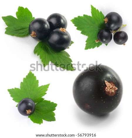 Black currant with green leaves isolated over white background