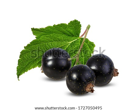 Black currants with leaves isolated on white background with clipping path Photo stock ©