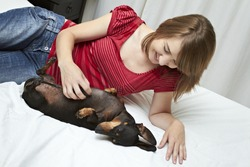 Black Dachshund dog being tickled while playing on soft white bed with young lady