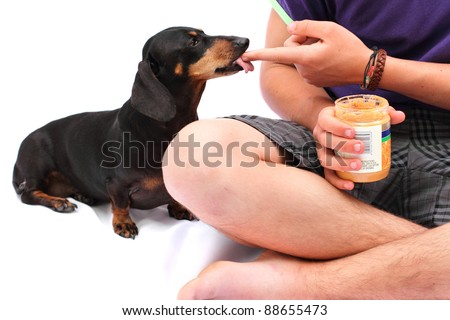 Black Dachshund dog enjoying peanut butter from young Caucasian boy's finger