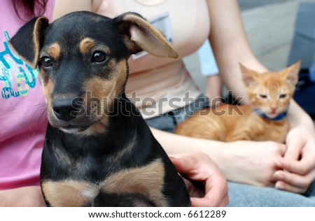 Black dog and yellow cat in friends hands