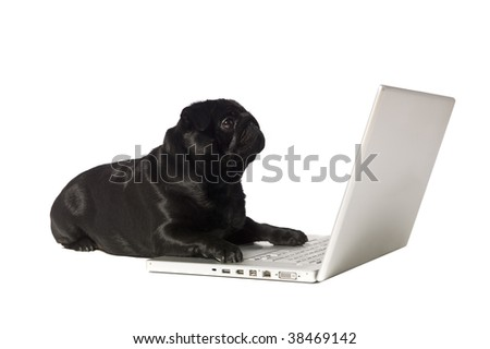 Black dog at the computer isolated on white