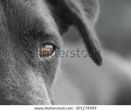 black dog face close-up (119)), with sand at the beach
