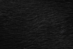 Black dog fur texture close-up, used as a background, shiny black wallpaper.