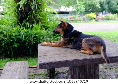 Black Dog - Gold Sitting on the table Wait for the owner back home #1085940719