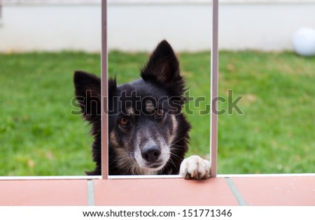 Black dog looks pleadingly through a window
