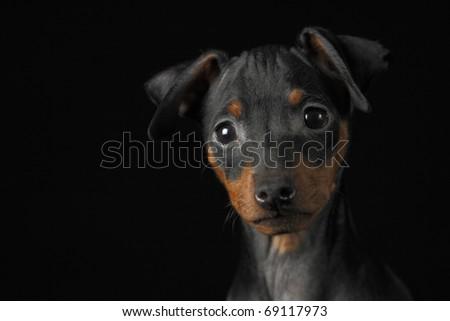 Black Dog on Black Background