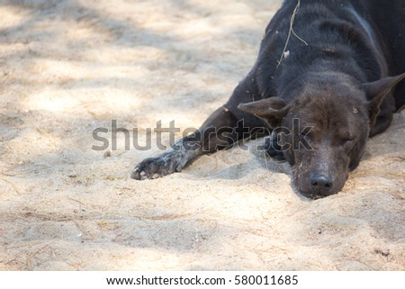 Stock Photo black dog sleeping on sand beach.