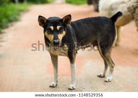 black dog Stand #1148529356