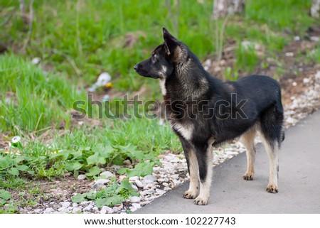 black dog standing on an asphalt path