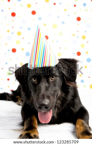 Black Dog Wearing Striped Party Hat