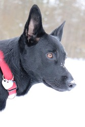 Black dog with red ribbon and heart necklace