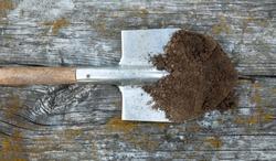 Black earth (ground, soil, dirt) on the metal spade (shovel). Agriculture. Farming. Black soil.