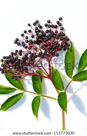 Black Elderberry on a white