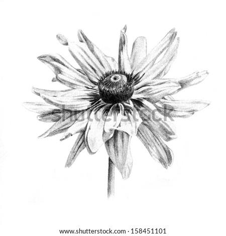 Organic Flowers Drawings Susan Flower Drawing