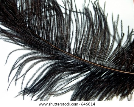 Black feather plume