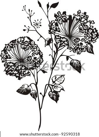 Black flower isolated on White background. illustration