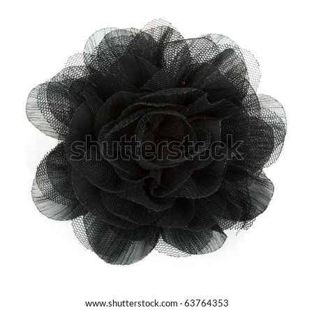 Black flower rose from lace on white background