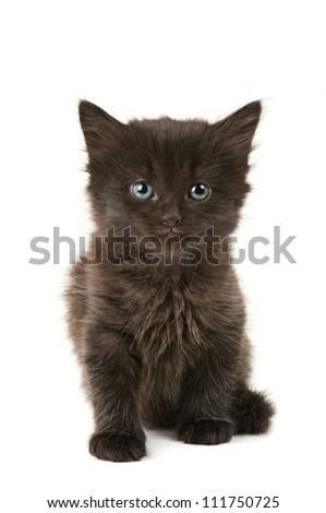 Black fluffy kitten isolated on white background