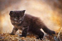 Black fluffy kitten outdoor in summer