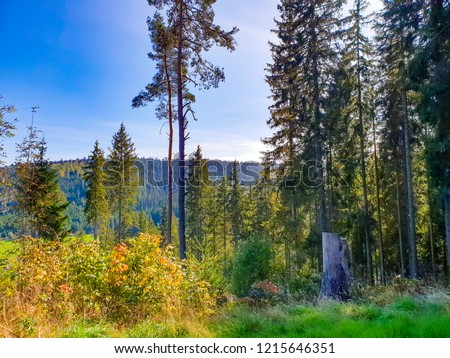 Black forest, Germany: green pine trees during the sunny day, the view on tree tops and blue sky #1215646351