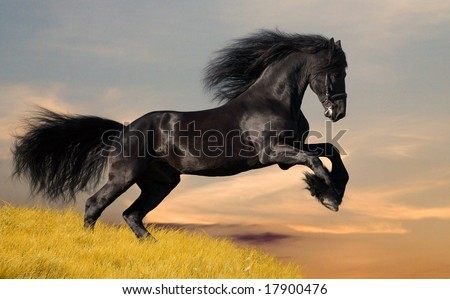 Friesian Horse Galloping Black Friesian Horse Gallop