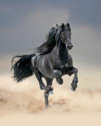 black friesian horse running in desert