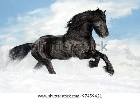 Black friesian horse runs gallop on the snow - stock photo