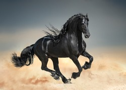 Black friesian horse with long mane runs in desert sand
