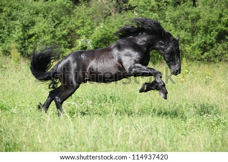 Black friesian stallion jumping