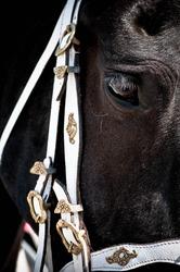 Black Frisian horse eye closeup