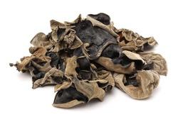 black fungus on white background