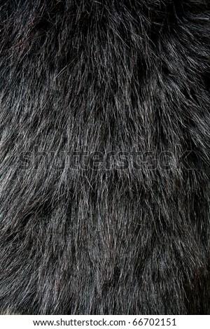 Black fur texture Closeup of beautiful. Useful as background