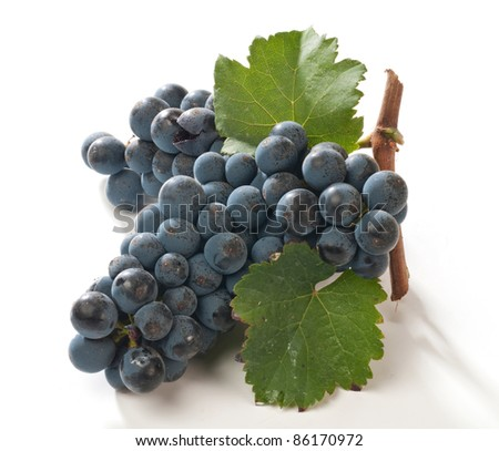 Black grapes for wine
