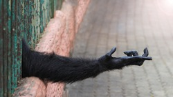 Black hand of a chimpanzee in a cage with no freedom that extends from prison for something. The concept of take me to the freedom.