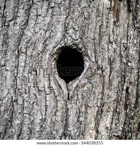 Black hole in tree trunk as entry to bird nest #344038355