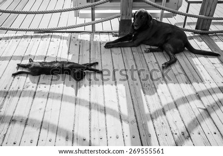 Black homeless cat and dog are resting in the shadow on a wooden footbridge