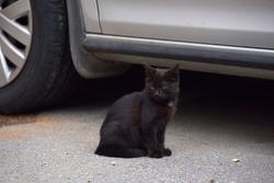 black homeless kitten in the street by the car