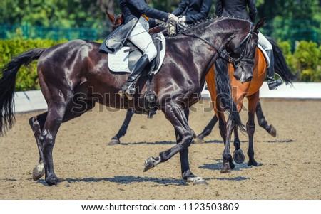 Black horse and rider. Dark horse portrait during equestrian sport competition. Advanced dressage test. Copy space for your text. #1123503809