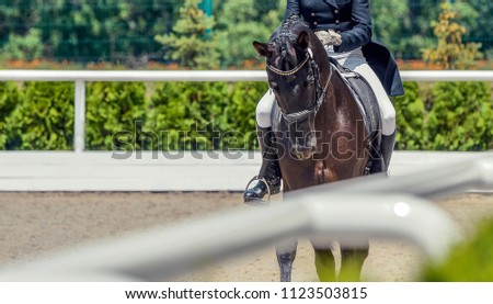 Black horse and rider. Dark horse portrait during equestrian sport competition. Advanced dressage test. Copy space for your text. #1123503815