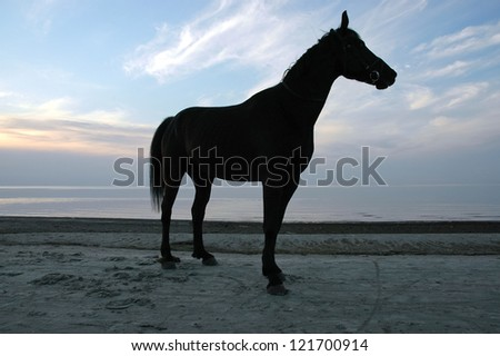 black horse by the sea at sunset