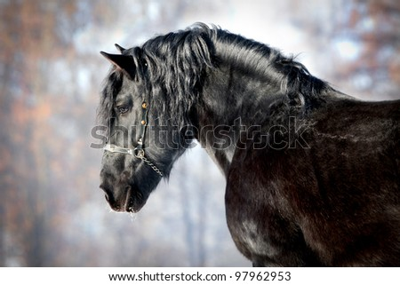 Black horse in forest