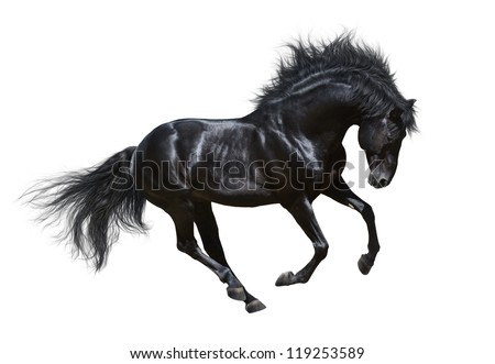 Black horse in motion - on white background