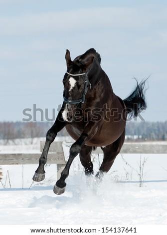 black horse jumps