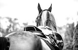 Black horse leather saddle, black saddle blanket and stirrups with dark straps dressed on the horse, black and white. Beautiful sorrel horse with bridle looking back.