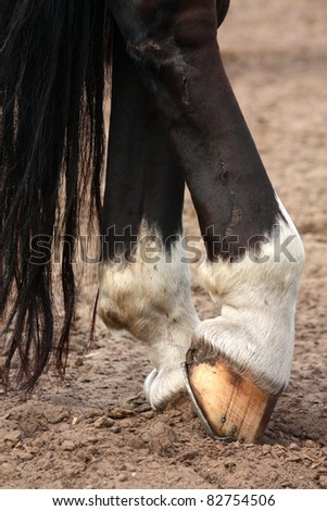 Black horse legs close up with horseshoe
