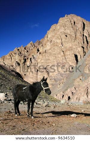 Black Horse, Mountain Climb- Stok Kangri (6,150m / 20,080ft), India