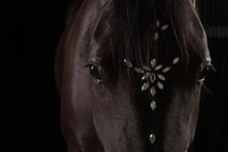 black horse on a black background
